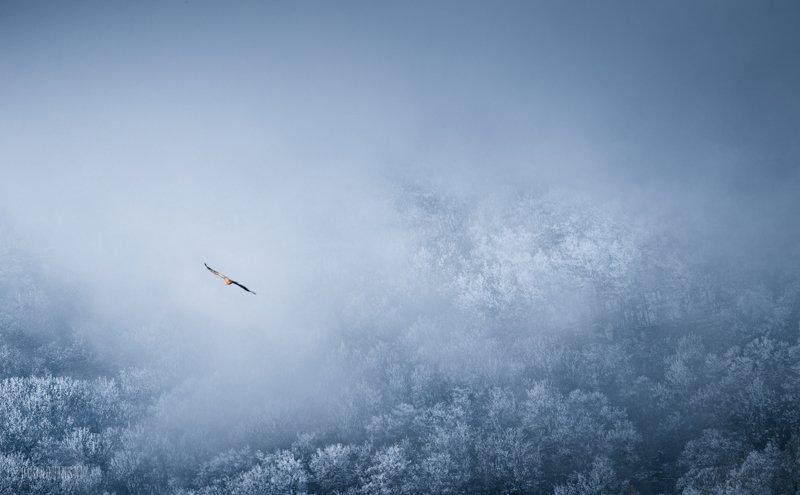 крым, зеленогорье, зима Полетphoto preview