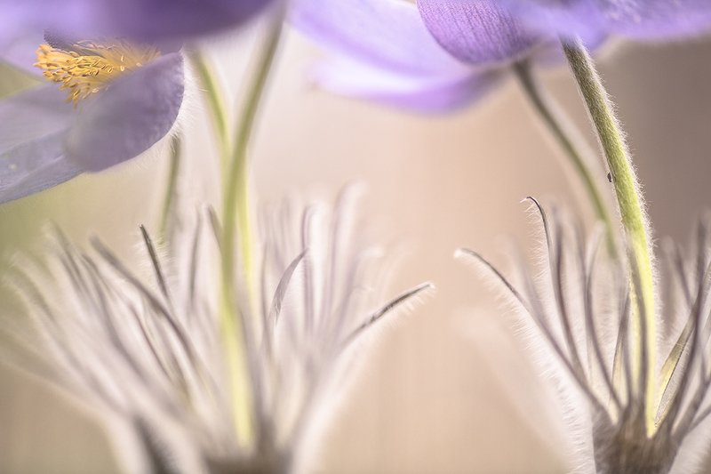 сон трава, блоха, апрель, весна, позитив, цвет, свет, воронеж, геннадий мещеряков Блошиные сны...photo preview
