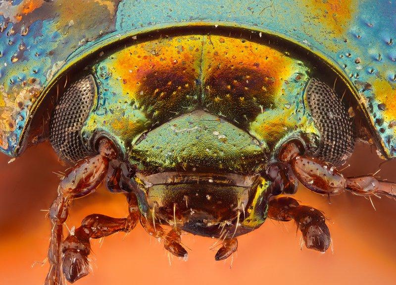 супермакро, макро, жук photo preview