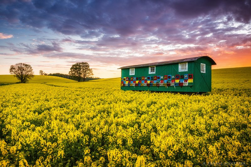 poland, polish, landscape, sunrise, sunset, colours, awesome, amazing, adventure, travel, beautiful, bee, colza, fields, beehive, light, sky, clouds Bee lifephoto preview