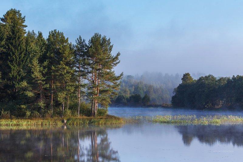 утро туман лес берег отражение ###photo preview