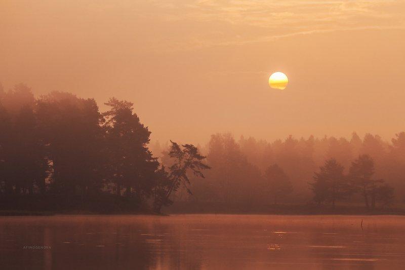утро солнце рассвет лес ###photo preview