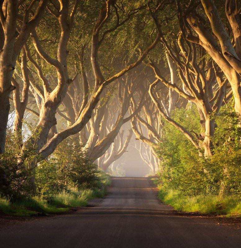 northern, ireland, dark hedges Dark Hedgesphoto preview