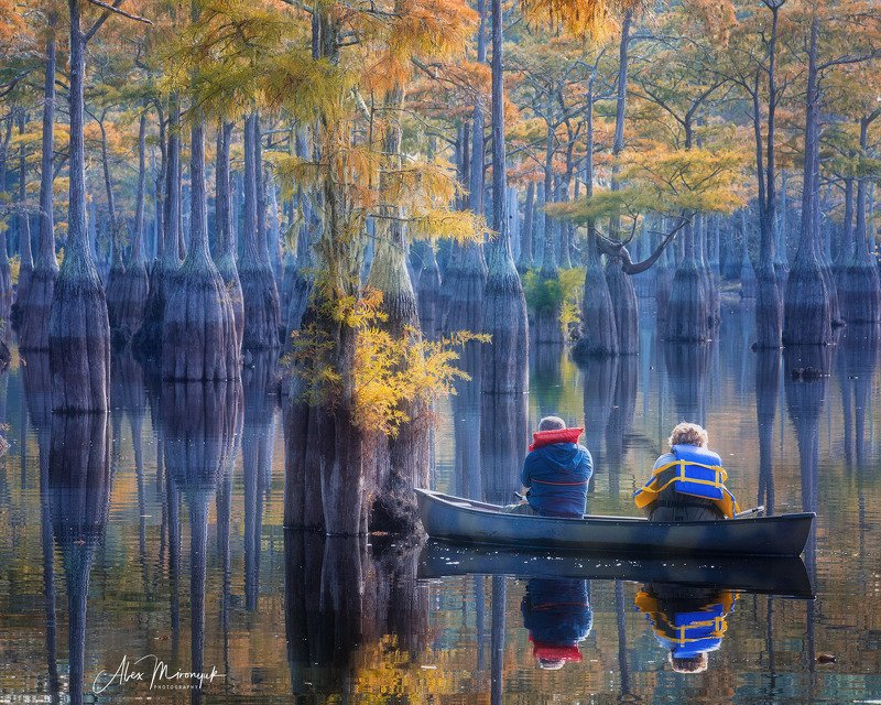 кипарис, болото, озеро, отражение, вода, туман, утро, осень, фото-тур, США Прогулка по кипарисовому озеруphoto preview