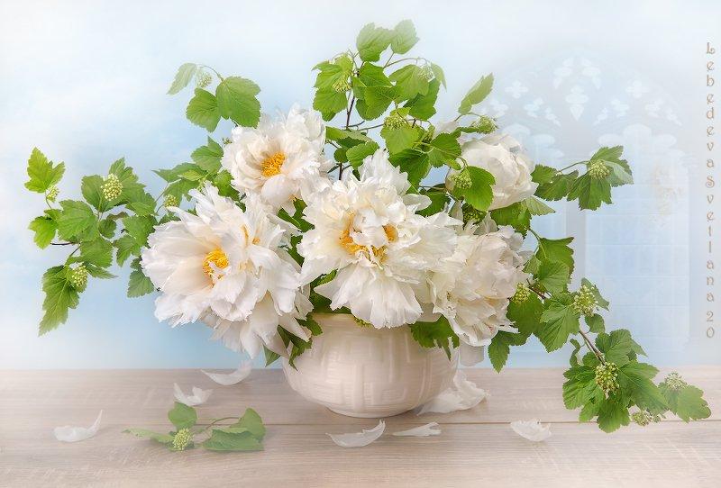 пионы,цветы,букет Пионовая красотаphoto preview