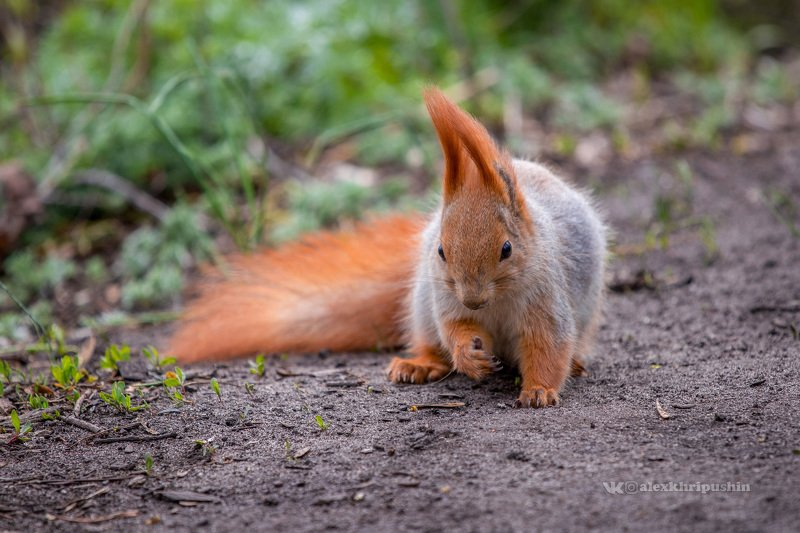 squirrel, forest, hike, nature, animals, spring Forest beautyphoto preview