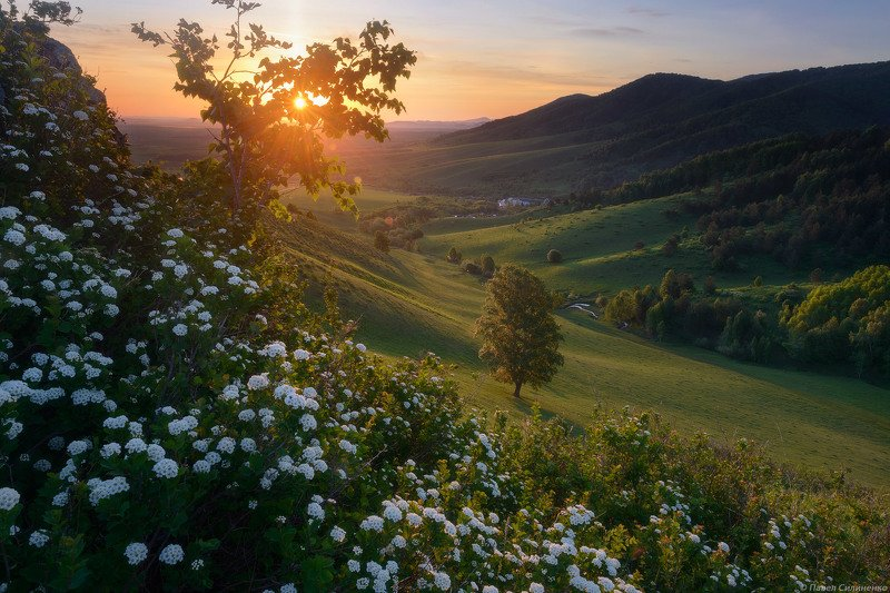 алтай, пейзаж, рассвет, солнце, восход, цветы, горы, свет, лес Майский рассветphoto preview