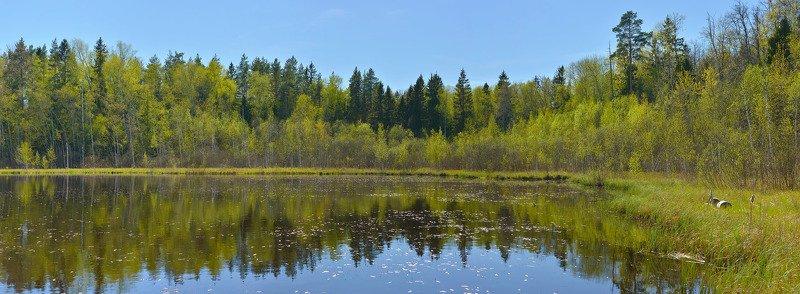 весна, первая зелень, лесное озеро Юная зеленьphoto preview