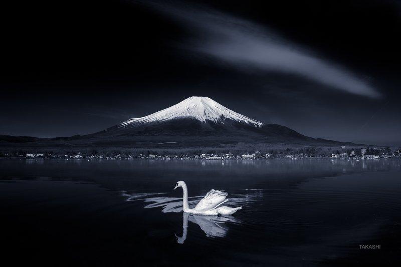 Fuji,Japan,mountain,swan,bird,cloud,lake,water,refelection,swim Swan on mirrorphoto preview