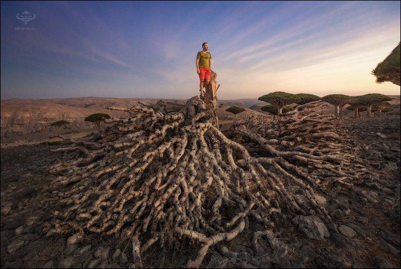 Йемен, Сокотра, фотопутешествие Победитель дракона...photo preview