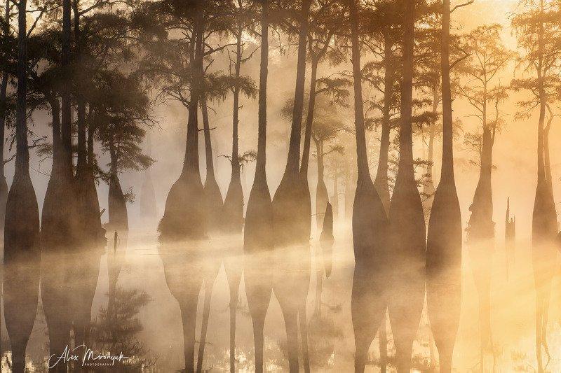 кипарис, болото, озеро, отражение, вода, туман, утро, осень, фото-тур, США Золотые Кипарисыphoto preview