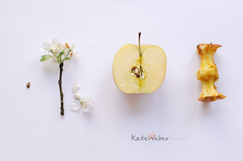 apple, seed, blossom, fruit Evolutionphoto preview