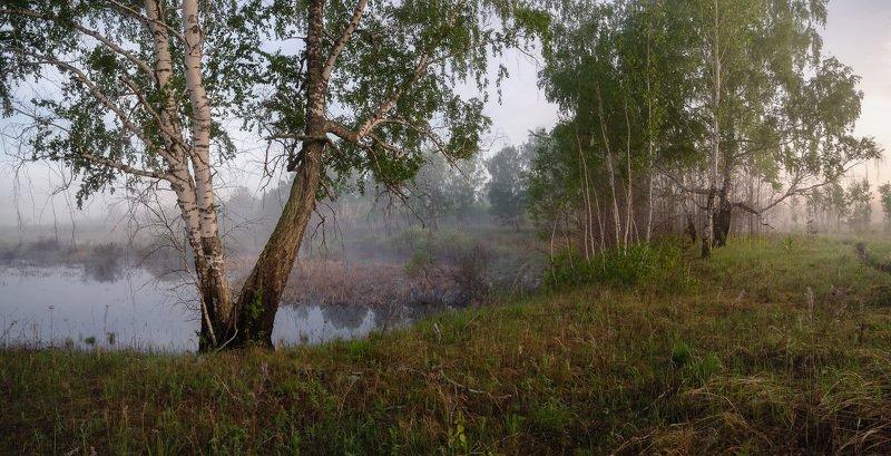 май, утро, туман, березы. ***photo preview