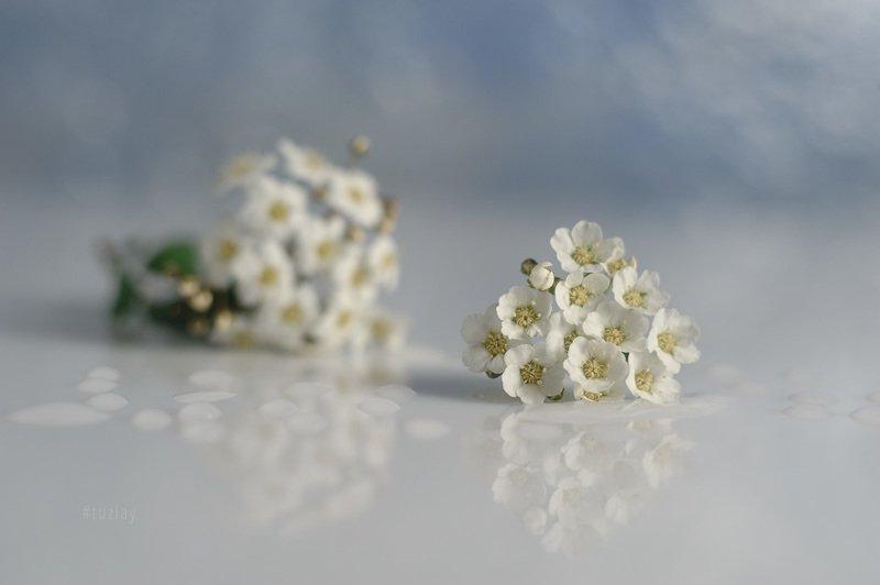 спирея, невеста, листки спиреи, цветок спиреи, лепестки спиреи, бутоны спиреи, гелиос 44 Продолжение \
