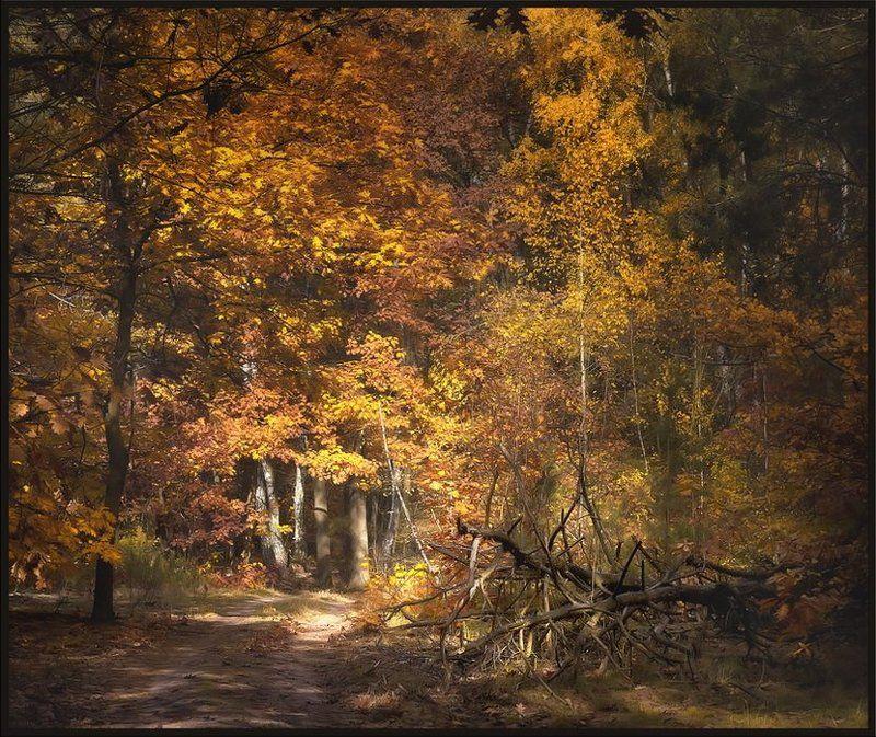 Осенняя ностальгияphoto preview