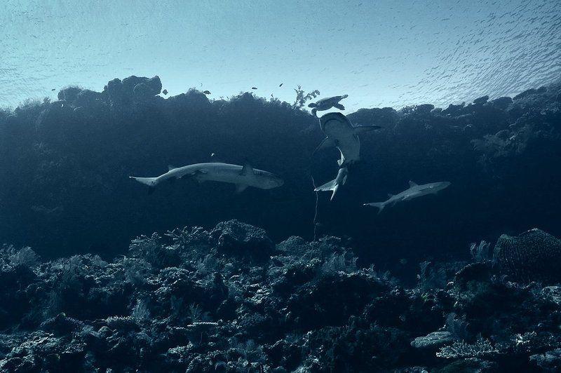 акулы, черепаха Акулы острова Комодоphoto preview