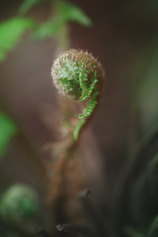 farn, green, spiral, macro Geometry of the naturephoto preview