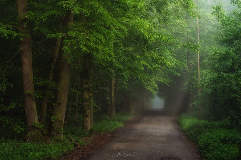 forest, fog, tree, morning, green, way Road from the forestphoto preview