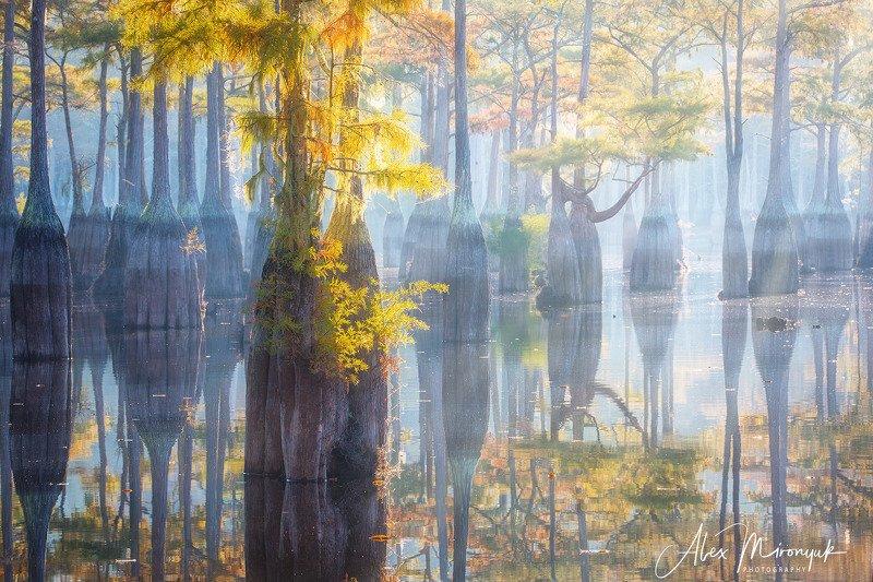 кипарис, болото, озеро, отражение, вода, туман, утро, осень, фото-тур, США Осень пришла на кипарисовые болота Джорджииphoto preview