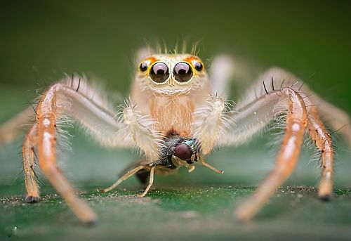 Two striped jumper with kill