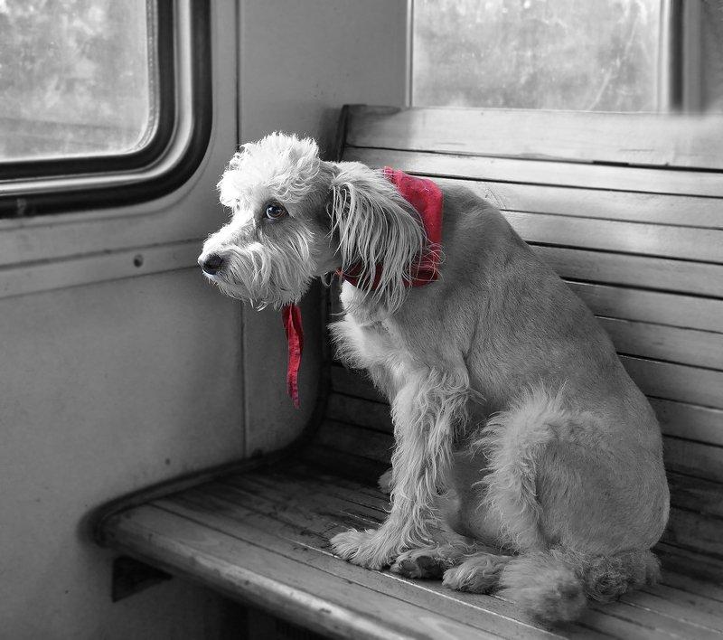 #животные, #собака, #вэлектричке Можно я \