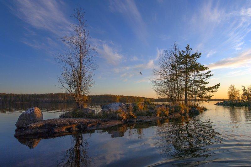 карелия Парусник весныphoto preview