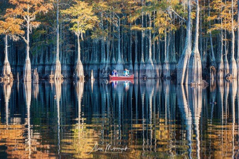 кипарис, болото, озеро, отражение, вода, туман, утро, осень, фото-тур, США Кипарисовое безмолвиеphoto preview