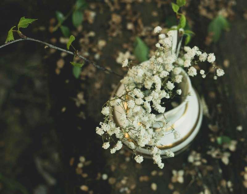 Цветыphoto preview