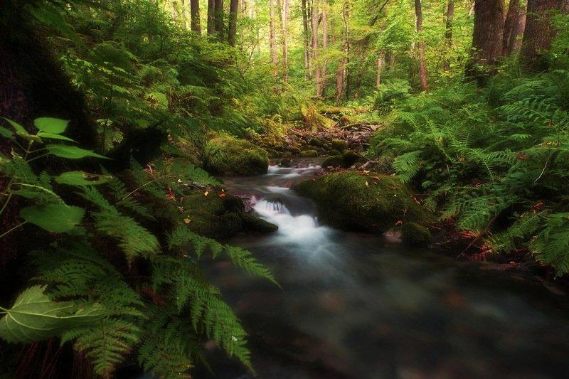 горы лес ручей Лесной ручейphoto preview
