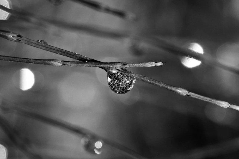 Капли дождяphoto preview