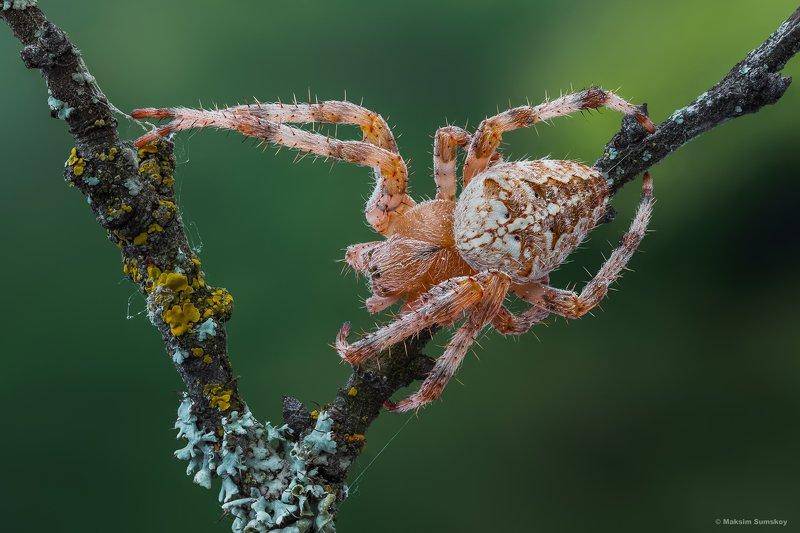 макро,стекинг,паук,вега-11у ***photo preview