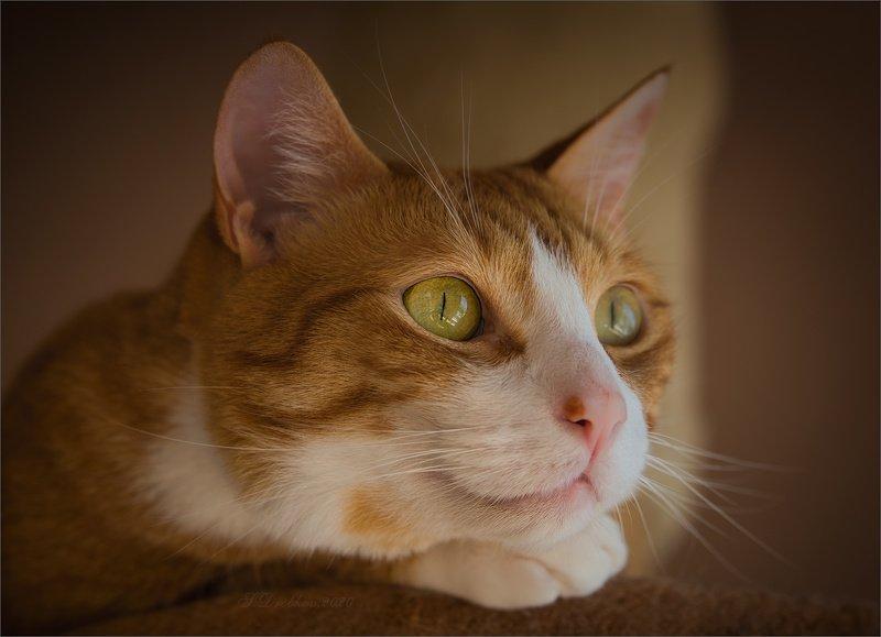 кошки, портрет Птичка за окномphoto preview