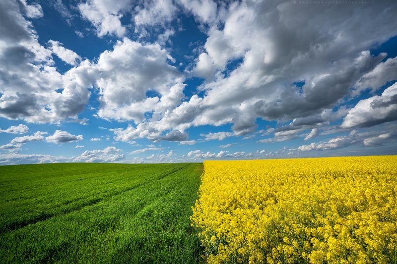 colza rape landscape sky clouds dranikowski field agriculture yellow rzepak day grass countryside Countrysidephoto preview
