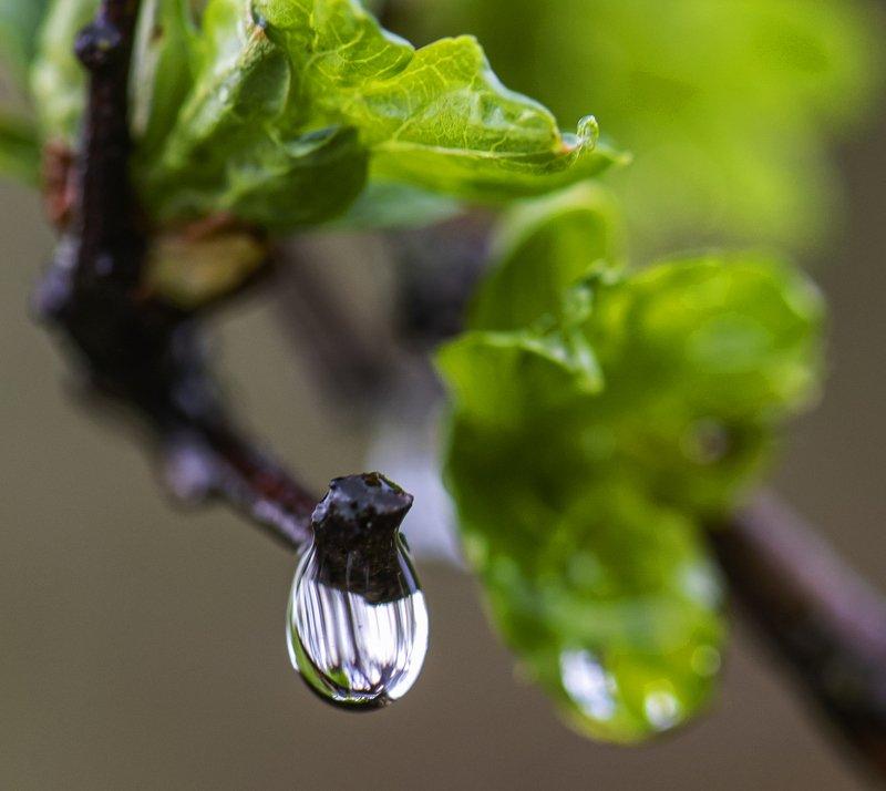 дождь, капли, слезы Слезы самоизоляцииphoto preview