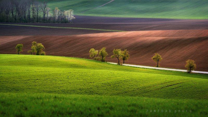 волны,пейзаж, поле, весна, деревья, волны, природа,чехия,zanfoar,czech republic,czechia,nikon d750,moravia,haná волны в поляхphoto preview