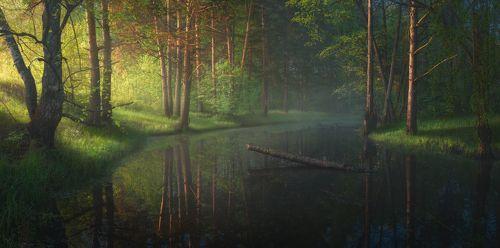 Утро на лесной речке