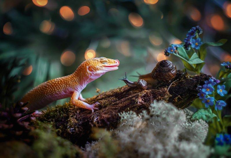 ящерица геккон эублефар мох природа кора  макро Вкуснятина!photo preview