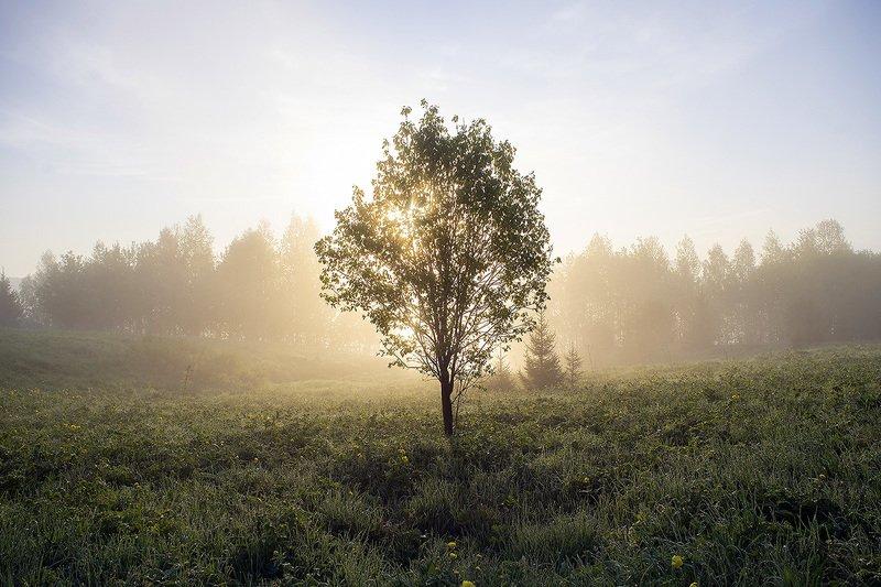 утро, туман, дерево По утренней росеphoto preview