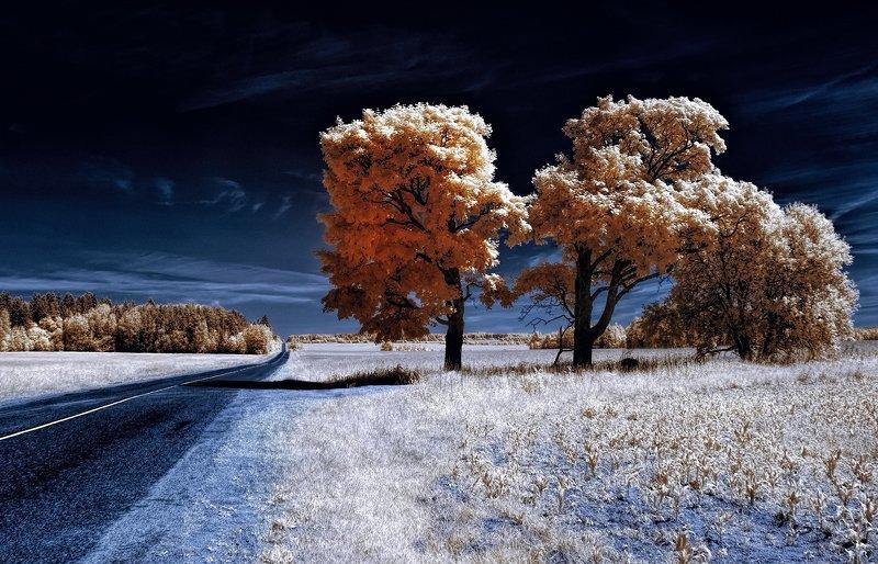 infrared,ик-фото,инфракрасное фото, инфракрасная фотография, пейзаж, лето На летней обочине.photo preview