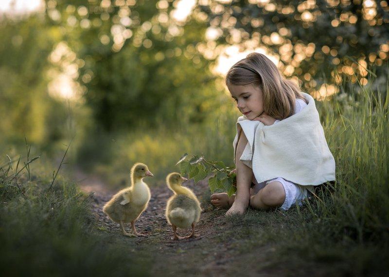 gooseherd goose little girl child cute bokeh dranikowski path magic childhood Gooseherdphoto preview