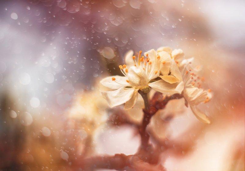 весна природа цветы красота яблоня боке Яблоневый цветphoto preview