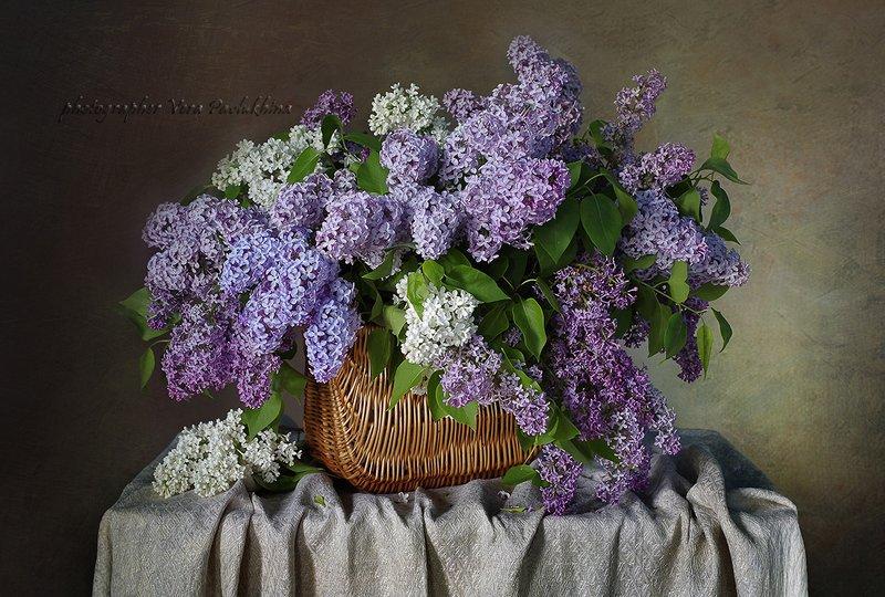 сирень,натюрморт,цветы,весна,вера павлухина, Магия сирени .photo preview