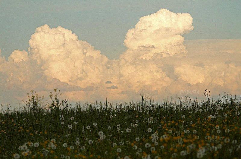 пейзаж лето одуванчики поле  облака Вот и лето пришло.photo preview