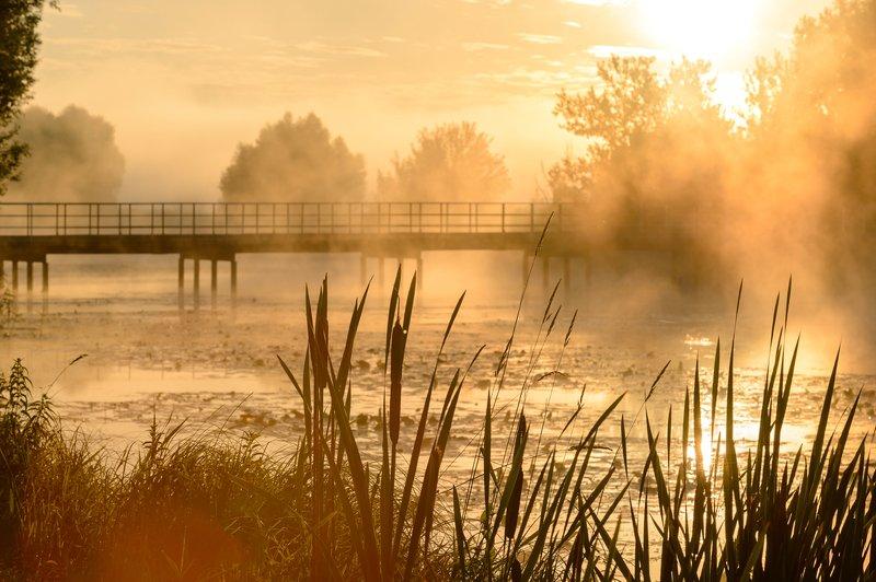 пейзаж,утро,туман,рассвет,красота,лето \