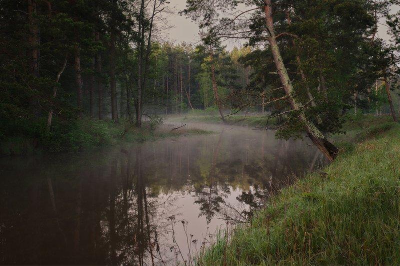 река. деревья, лес, туман Туманная рекаphoto preview