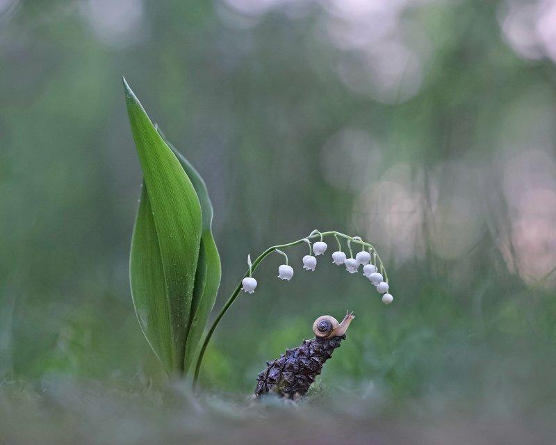 ландыши, закат. весна, улитка Всю жизнь бы взором Вас ласкать...photo preview