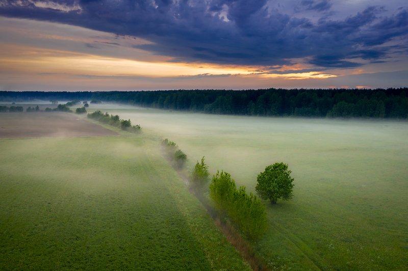 туман, поле, лес Над туманомphoto preview