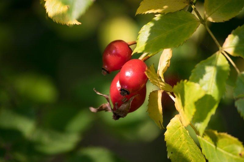 природа, ягоды, цветы, тепло, зелень ...photo preview