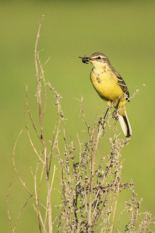 птицы.весна,насекомое, Ужин...photo preview