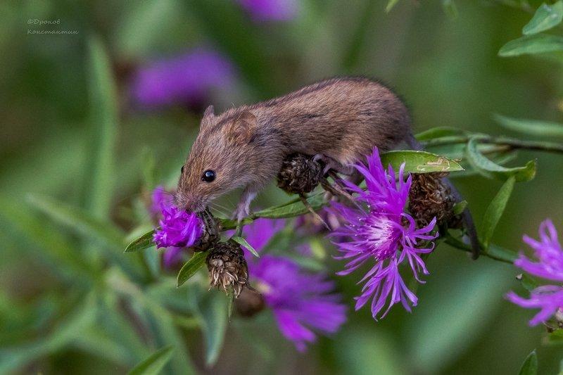мыши, цветы. Любитель цветовphoto preview